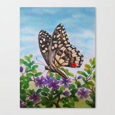 Chequered swallowtail  Canvas Print