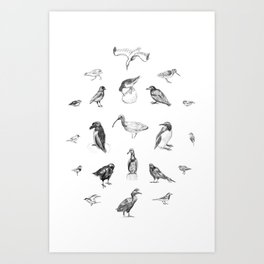 Manx Fauna - (British) Birds Art Print