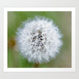 Dandelion Dew Art Print