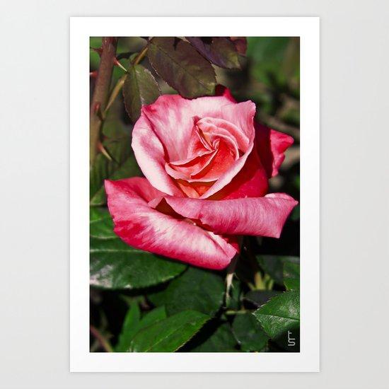 Red Rose I Art Print
