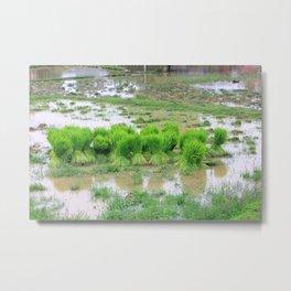 Les pousses, Don Det, Laos Metal Print