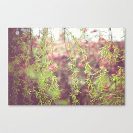 Willow leafs Canvas Print