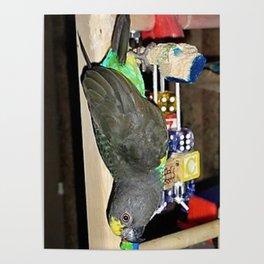 Batbird Poster