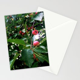 Among the Cherries Stationery Cards