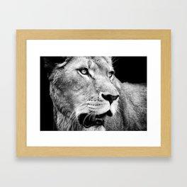 Lioness Framed Art Print