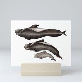 Short-finned pilot whale (Globicephala macrorhynchus) Mini Art Print