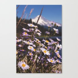 Mt. Hood's Daisies Canvas Print