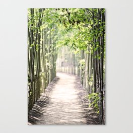Walking Path in the Woods Canvas Print