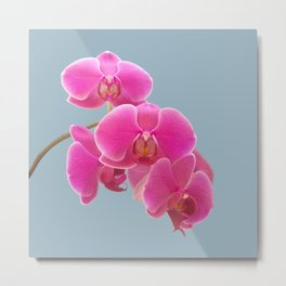Orchids Photo to Paint on Blue Metal Print