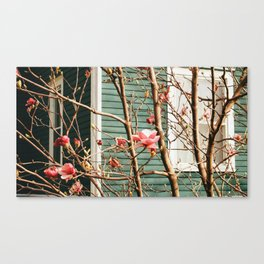 Magnolia and Green Canvas Print