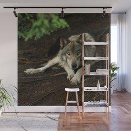 Intense Timber Wolf Wall Mural
