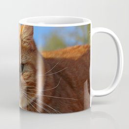 Fat Cat under the Sun Coffee Mug