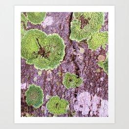 Tree Bark Pattern with Lichen #7 Art Print