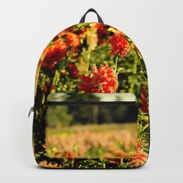 BEAUTIFUL ORANGE DAHLIAS IN THE COUNTRYSIDE - IN THE LATE SUMMER SUNSHINE Backpack