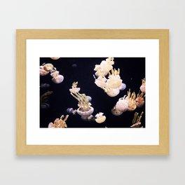 The Jellies Framed Art Print