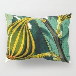 Fig plant, vintage illustration Pillow Sham
