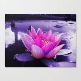 Water Lily Blues Canvas Print