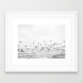 """Seagulls"" | Coastal black and white photo | Film photography | Beach Framed Art Print"