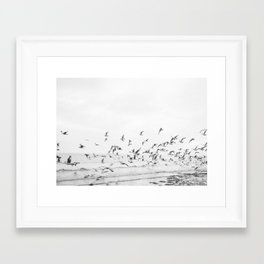 """Seagulls"" 