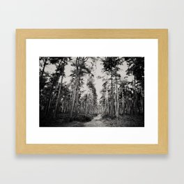 the path through the forest ... Framed Art Print