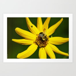 The Bumble and The Sunflower #1 Art Print