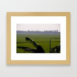 Rice Fields Framed Art Print