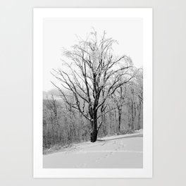 Maple Tree in Winter Art Print