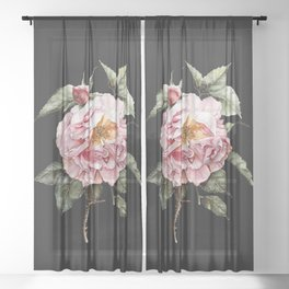 Wilting Pink Rose Watercolor on Charcoal Black Sheer Curtain