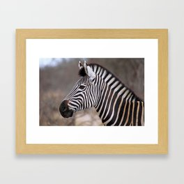 The Zebra - Africa wildlife Framed Art Print
