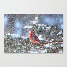 Let It Snow (Northern Cardinal) Canvas Print