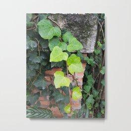 Plantae II Metal Print