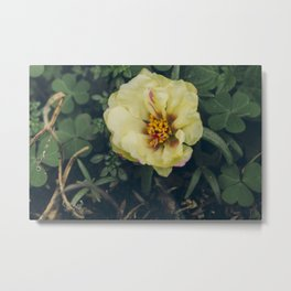 Flor de Seda - Flower Photography Metal Print