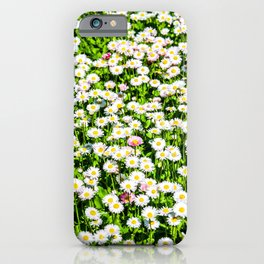 Field of daisy flowers iPhone Case