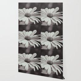 Single Daisy BW Wallpaper