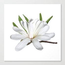 The Flower is the Star (Magnolia) Canvas Print