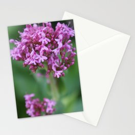 Flower Photo 1773 taken in Gardens in Newquay, Cornwall Stationery Cards