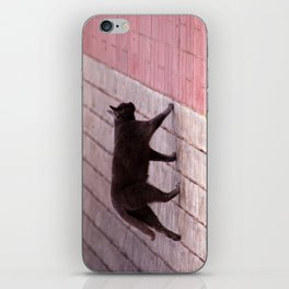 Cat Walking  6589 iPhone Skin
