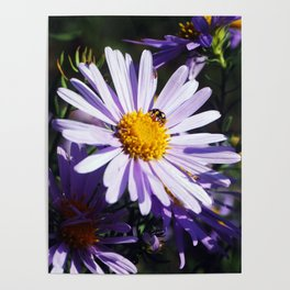Busy Bee By LyubovArt Poster