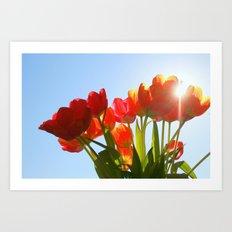 Tulip Flare Art Print