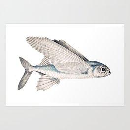 fish poisson volant Art Print