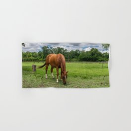 Brown Horse with White Blaze Grazing in a Ranch Pasture Hand & Bath Towel