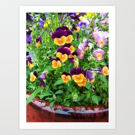 Petunias in a Pot Art Print
