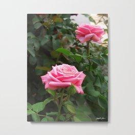 Pink Roses in Anzures 5  Metal Print