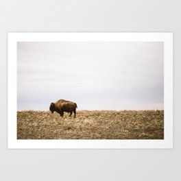 Bison all alone in this world Art Print