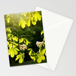 Flowering Aesculus horse chestnut foliage Stationery Cards