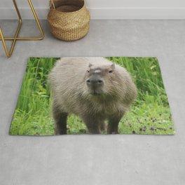 So cute capybara Rug