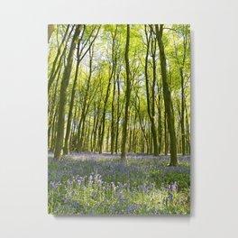 Bluebells of Micheldever Wood Metal Print