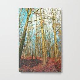 Trees in autumn light Metal Print
