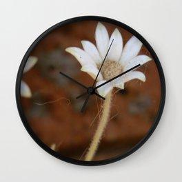 Actinotus Helianthi Wall Clock