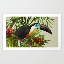Channel- billed toucan vintage illustration. Art Print